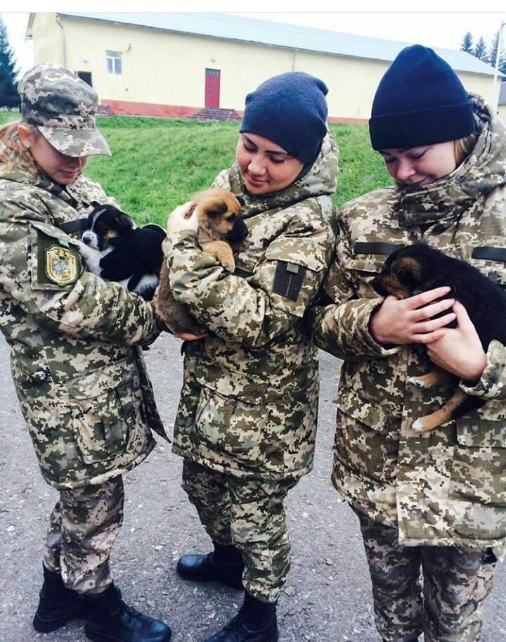 Чим займаються на Донбасі найкращі друзі бійців АТО - 10 - фото 2
