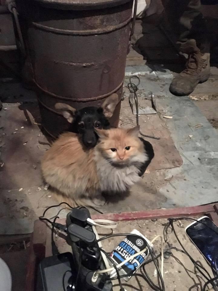 За що котам в АТО треба поставити пам'ятник-13 - фото 7