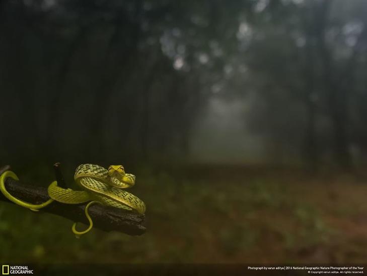 """Роботи фіналістів конкурсу National Geographic """"Кращий фотограф природи 2016"""" - фото 28"""