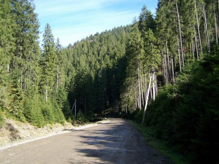 Чому село Синевир стало раєм для лісорубів та бокорашів - фото 1