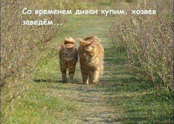 """Цирк """"Трусілей"""" під Радою та Лех Валенса - професор у Поплавського - фото 17"""
