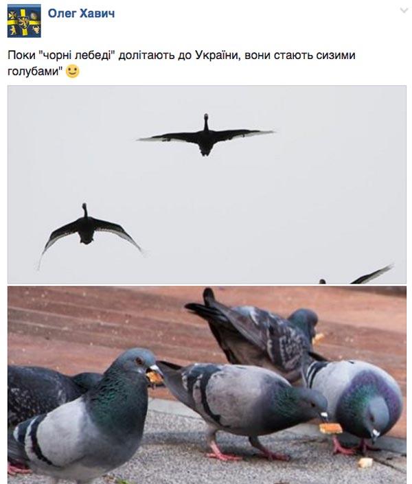 Як вкрали задекларовані вили Ляшка та сиза голубка Юлія Тимошенко - фото 6