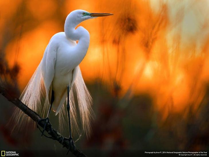 """Роботи фіналістів конкурсу National Geographic """"Кращий фотограф природи 2016"""" - фото 33"""