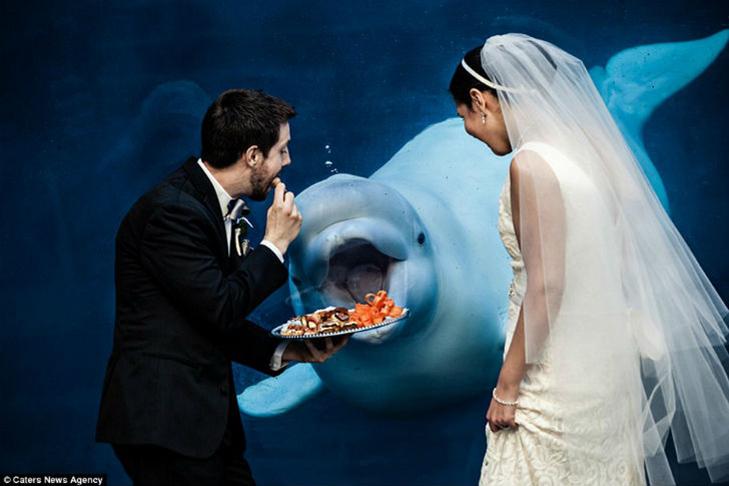 30 прикладів, коли у весільного фотографа все добре з почуттям гумору - фото 15