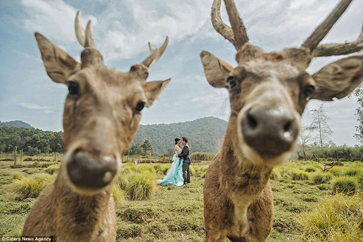 30 прикладів, коли у весільного фотографа все добре з почуттям гумору - фото 30