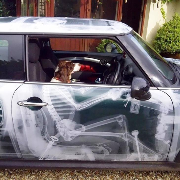 25 веселих ідей, як прикрасити своє авто - фото 5