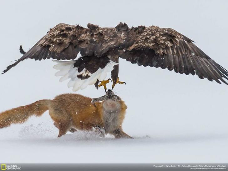 """Роботи фіналістів конкурсу National Geographic """"Кращий фотограф природи 2016"""" - фото 20"""