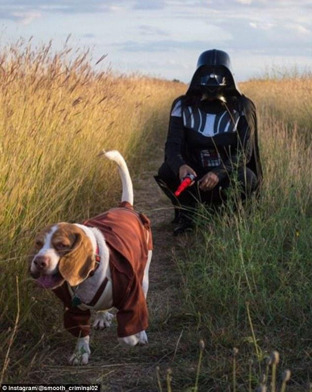 Як коней, собак і папуг наряджають до Хелловіна - фото 1