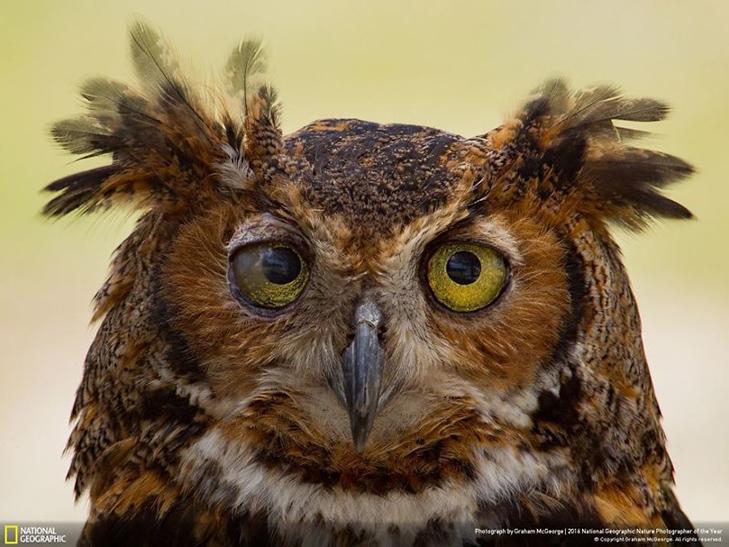 """Роботи фіналістів конкурсу National Geographic """"Кращий фотограф природи 2016"""" - фото 2"""