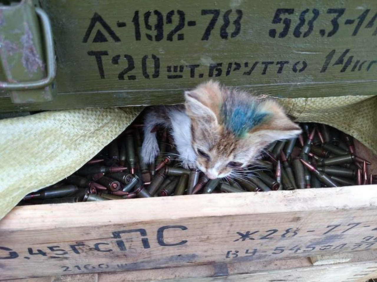 За що котам в АТО треба поставити пам'ятник-9 - фото 9