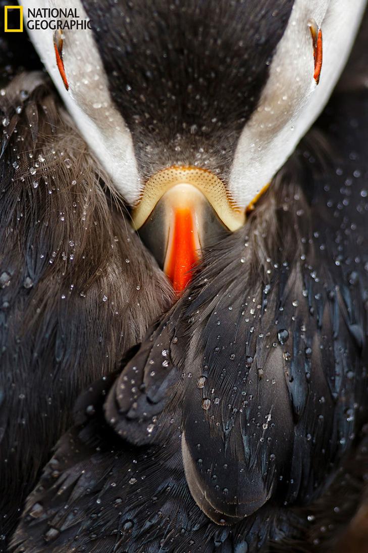 """Роботи фіналістів конкурсу National Geographic """"Кращий фотограф природи 2016"""" - фото 35"""