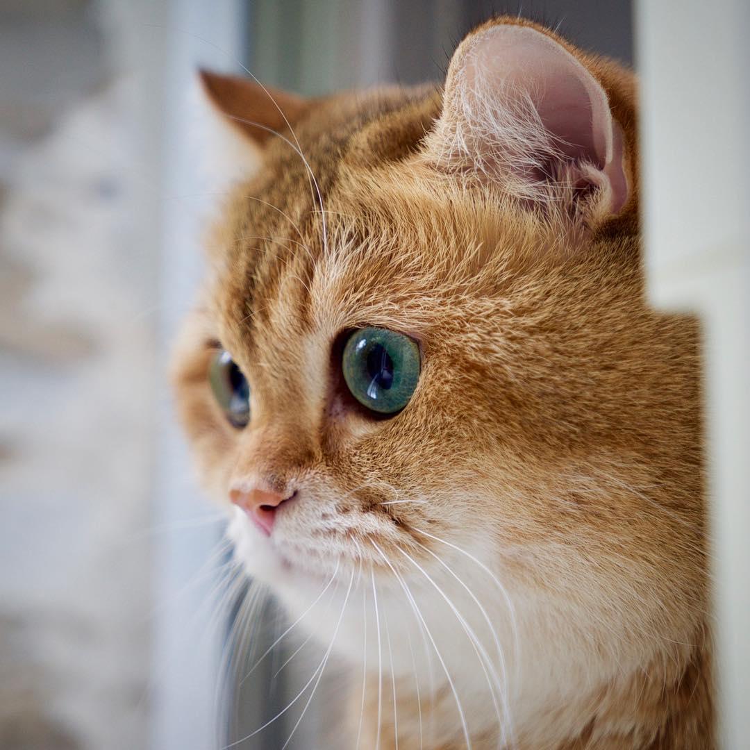 ferrill cats