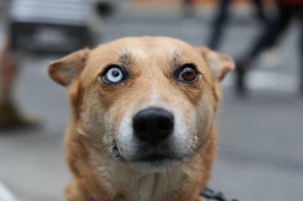Вісім неймовірно красивих тварин з різнокольоровими очима  - фото 7
