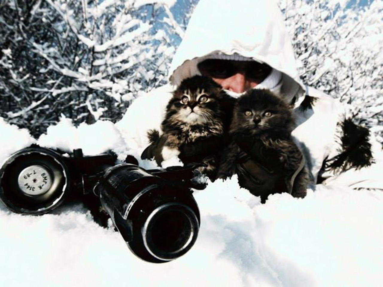 За що котам в АТО треба поставити пам'ятник-9 - фото 8