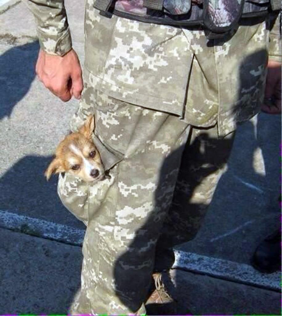 Чим займаються на Донбасі найкращі друзі бійців АТО - 8 - фото 7