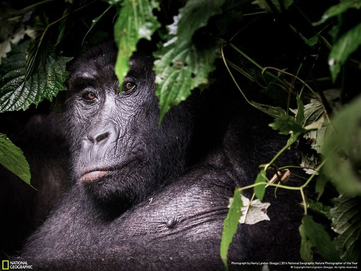 """Роботи фіналістів конкурсу National Geographic """"Кращий фотограф природи 2016"""" - фото 10"""