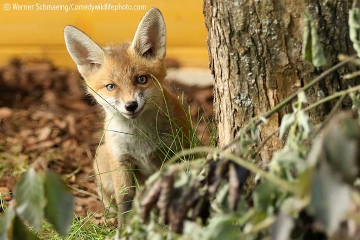 40 найсмішніших тварин з конкурсу Comedy Wildlife Photography Awards 2016 - фото 13