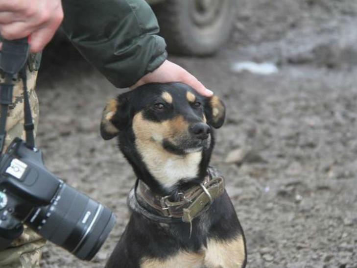 Чим займаються на Донбасі найкращі друзі бійців АТО - 10 - фото 9