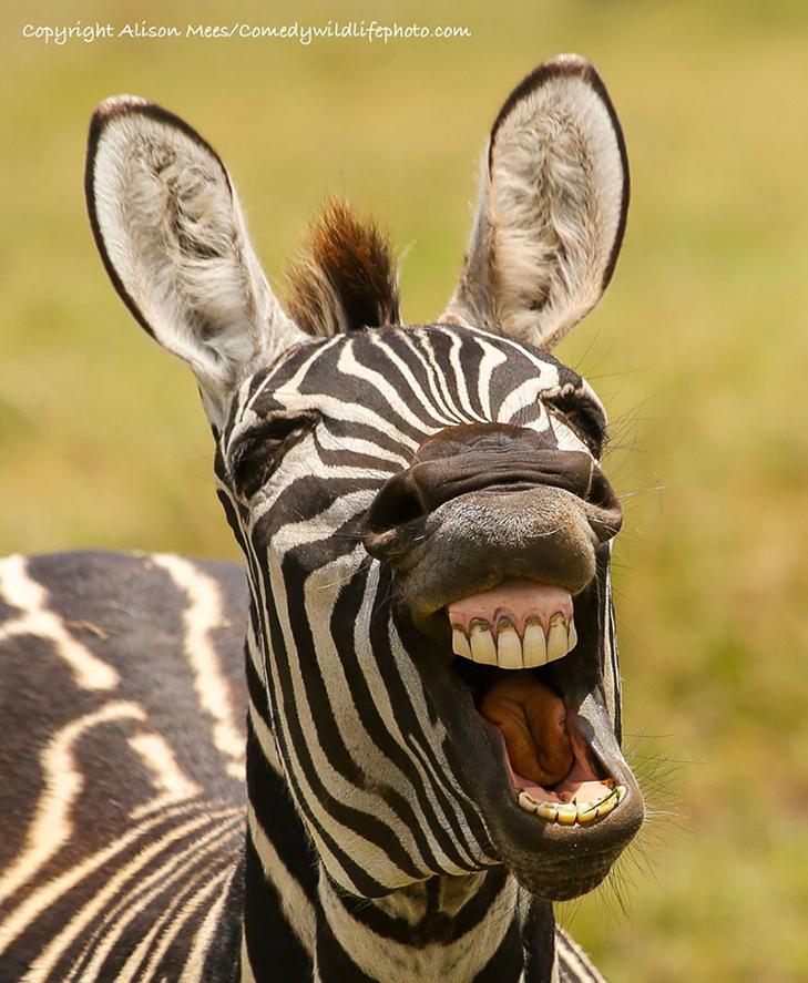 40 найсмішніших тварин з конкурсу Comedy Wildlife Photography Awards 2016 - фото 27