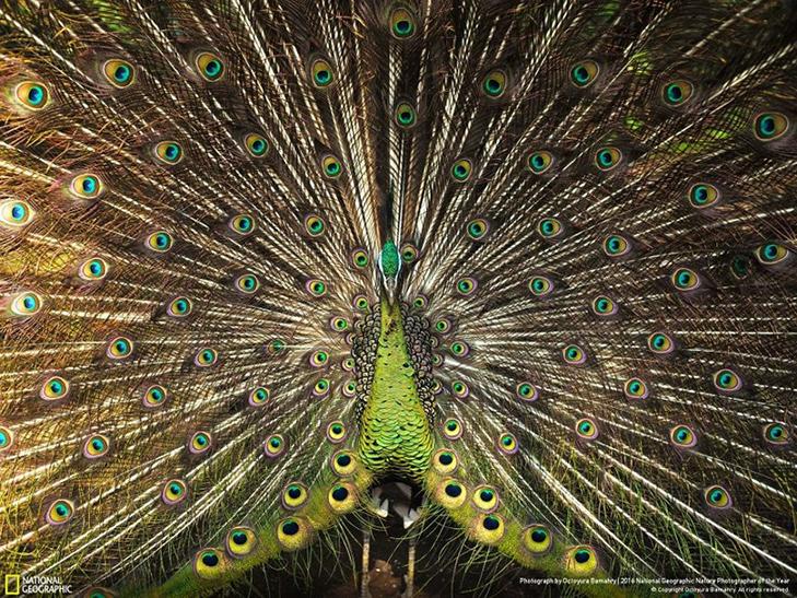 """Роботи фіналістів конкурсу National Geographic """"Кращий фотограф природи 2016"""" - фото 21"""