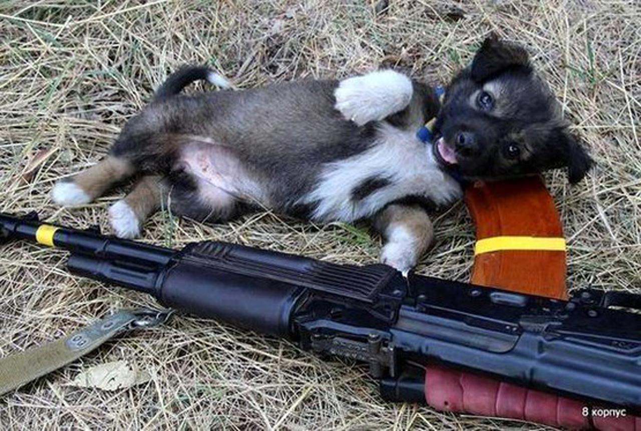 Чим займаються на Донбасі найкращі друзі бійців АТО - 8 - фото 3