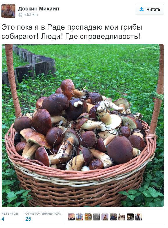 Нардеп Добкін поскаржився на відсутність грибів у Раді (ФОТО, ВІДЕО) - фото 1