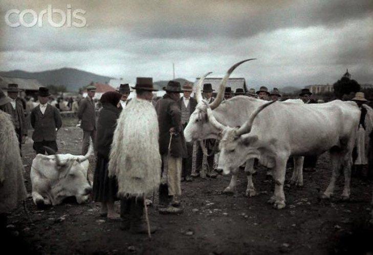 Як колоритно виглядало Закарпаття та закарпатці у минулому столітті - фото 2