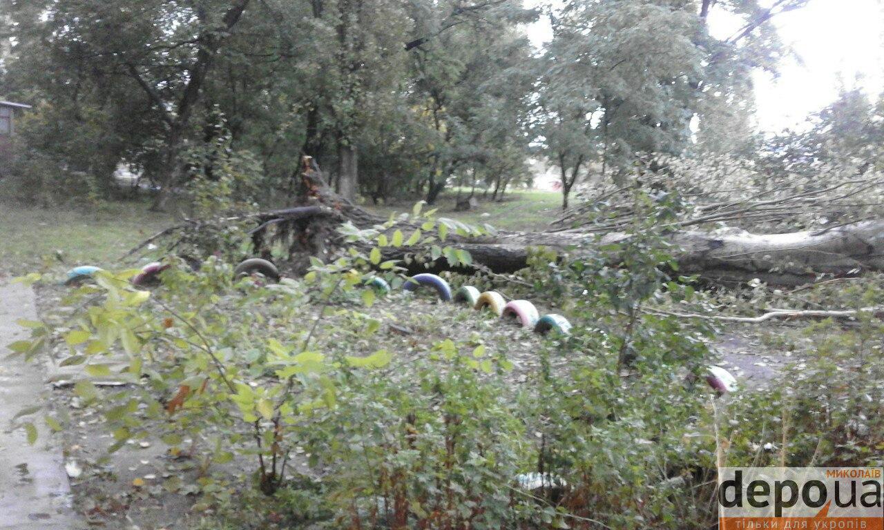 Миколаївці декілька днів розпилюють тополю, що впала після негоди