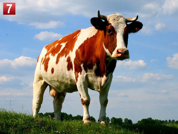 Політики та тварини: вгадай де чий улюбленець - фото 7