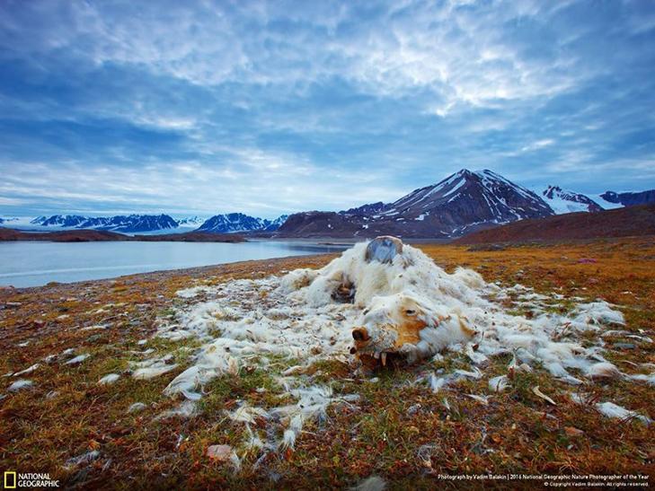 """Роботи фіналістів конкурсу National Geographic """"Кращий фотограф природи 2016"""" - фото 22"""