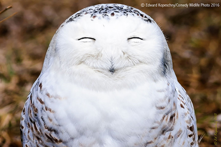 40 найсмішніших тварин з конкурсу Comedy Wildlife Photography Awards 2016 - фото 14