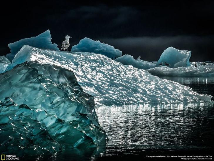 """Роботи фіналістів конкурсу National Geographic """"Кращий фотограф природи 2016"""" - фото 5"""