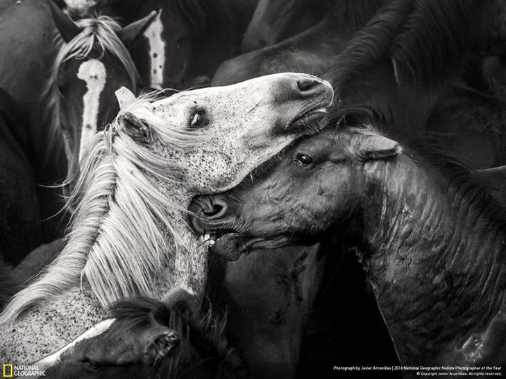 """Роботи фіналістів конкурсу National Geographic """"Кращий фотограф природи 2016"""" - фото 18"""