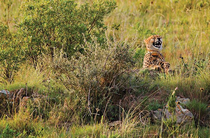 40 найсмішніших тварин з конкурсу Comedy Wildlife Photography Awards 2016 - фото 4