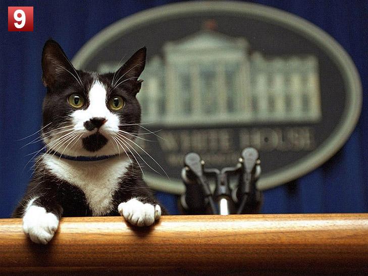 Політики та тварини: вгадай де чий улюбленець - фото 9