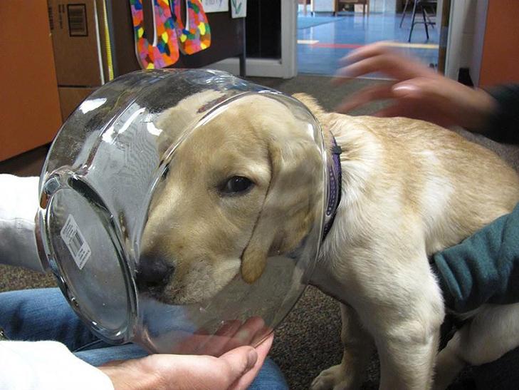 25 фото, чим зайняті собаки, коли господарів немає вдома - фото 11