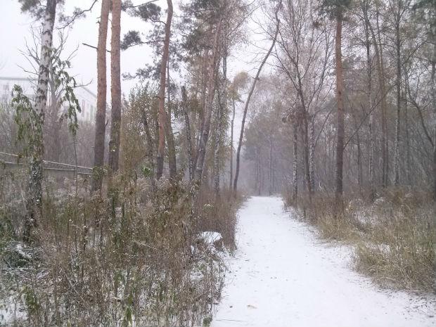 У Харкові сильний снігопад засипає ще зелені дерева (ФОТО) - фото 7