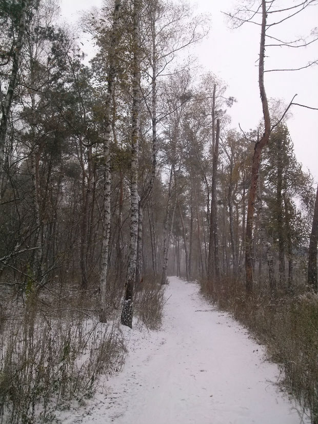 У Харкові сильний снігопад засипає ще зелені дерева (ФОТО) - фото 6