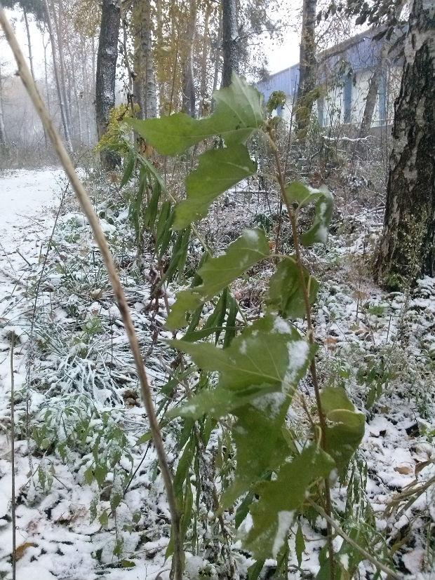 У Харкові сильний снігопад засипає ще зелені дерева (ФОТО) - фото 5