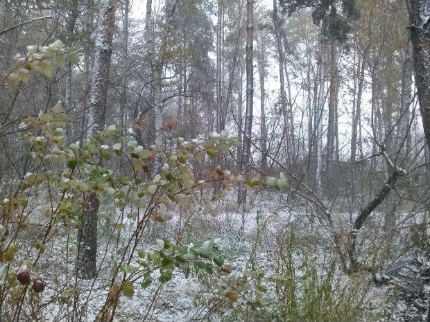 У Харкові сильний снігопад засипає ще зелені дерева (ФОТО) - фото 4