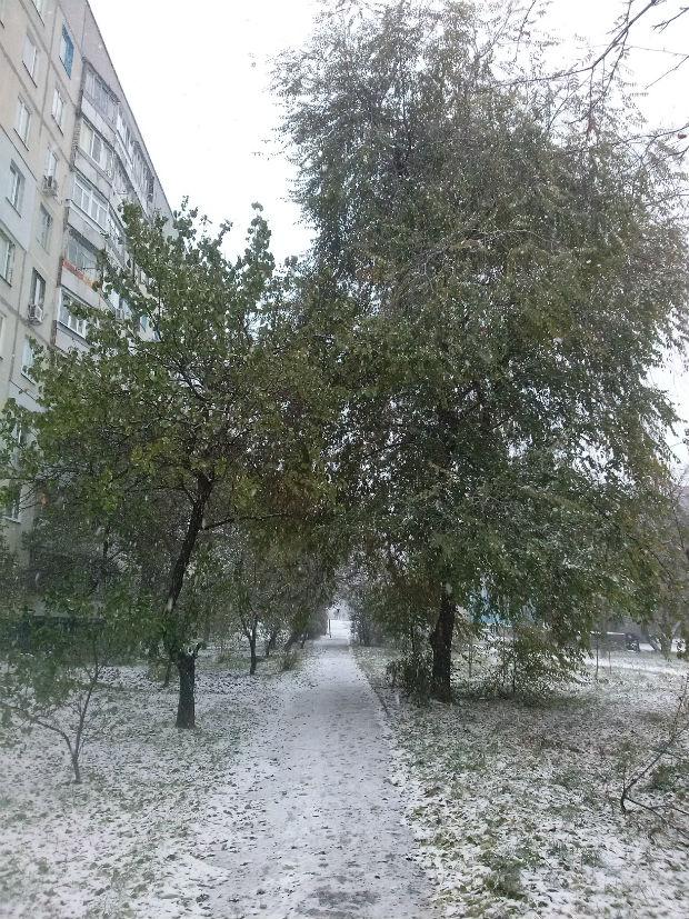 У Харкові сильний снігопад засипає ще зелені дерева (ФОТО) - фото 1