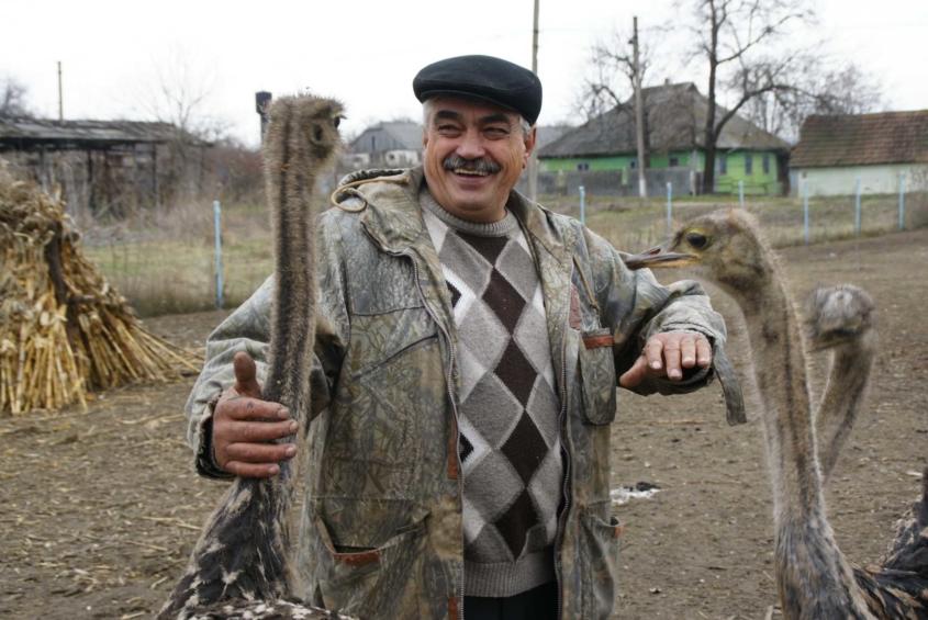 На сільському подвір'ї жителя Вінниччини пасуться страуси, фазани і дика свиня  - фото 2