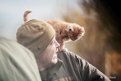 За що треба поставити пам'ятник котам в АТО - 11 - фото 6