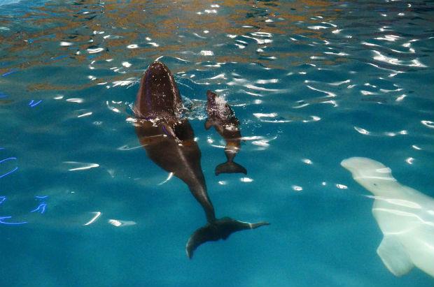 У харківському дельфінарії евакуйовані з АТО дельфіни привели поповнення (ФОТО) - фото 2