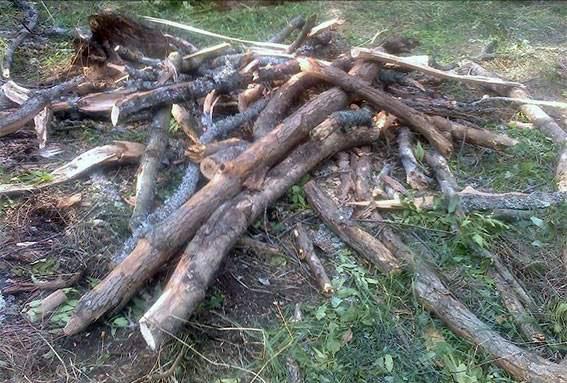 На Харківщині поліцейські припинили незаконну вирубку ліса - фото 1