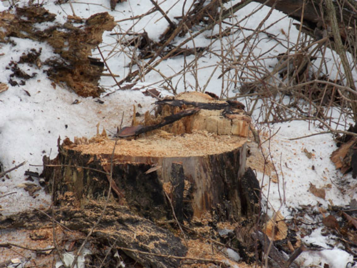На Полтавщині затримали автівку з незаконною деревиною - фото 1