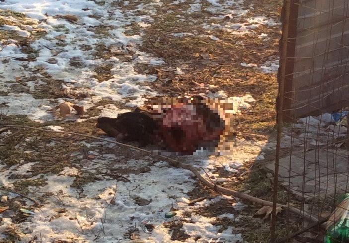 Труп по-звірячому вбитого собаки шокував жителів Мелітополя - фото 2