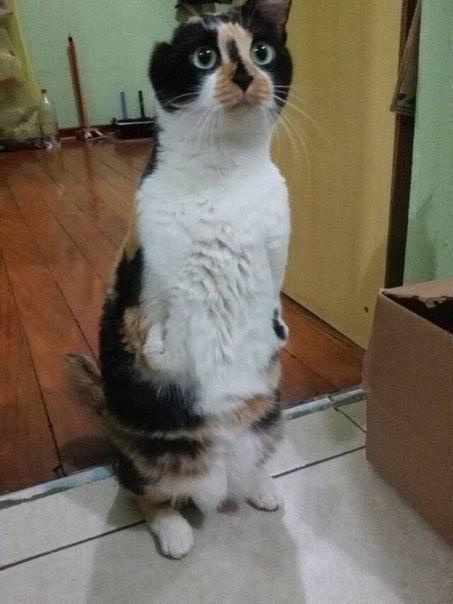 Як кішка-інвалід показує, що щастя існує - фото 1