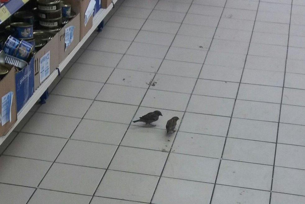 У мелітопольському супермаркеті оселилися горобці - фото 1