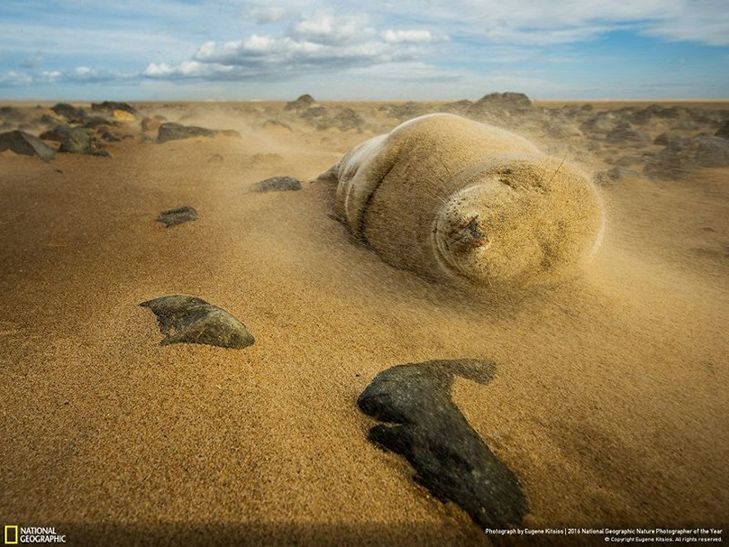 """Роботи фіналістів конкурсу National Geographic """"Кращий фотограф природи 2016"""" - фото 13"""